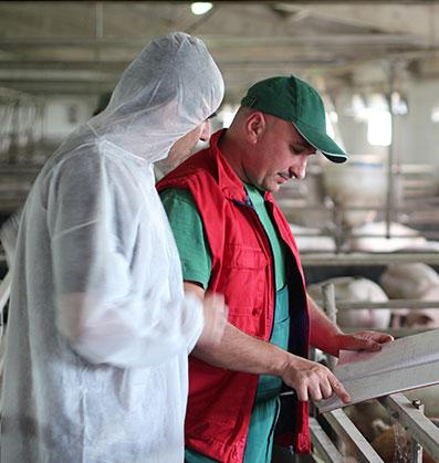 Swine Industries